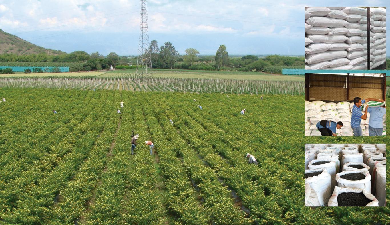 tree-a-cultivos