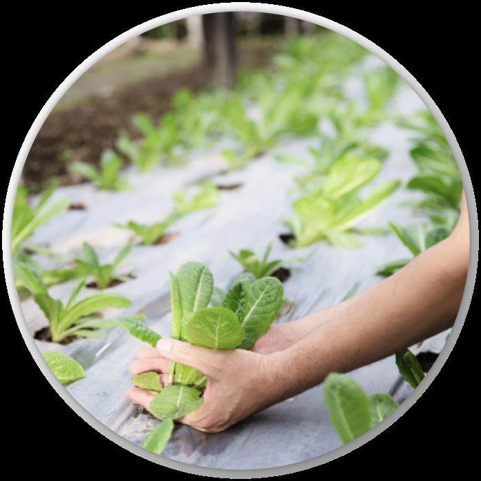 Icono tratamiento de aguas agrícolas de la linea Aqua Treatment de Tree-a Enterprises SAS